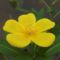 Tuzson Botanikus kert (5)