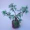 bonsai1a