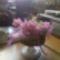 IMG_20120526_122838