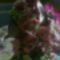 IMG_20140401_175243