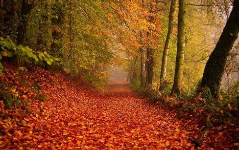 Őszi erdő-1575