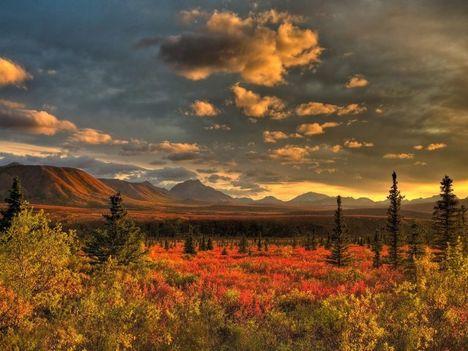 Szabó Andrea Anida:Megjött az ősz