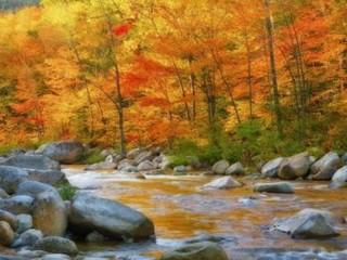 Őszi színek...