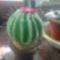 kaktusz_tüskével