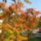 Őszi szinek a  fákon