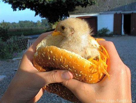 Mákos Ákos bio szendvicse