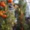 Őszi színek a paradicsomon