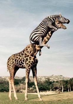 animal-fun