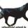 Rottweiler_1891041_5723_t