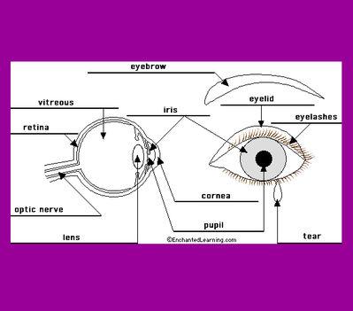 A szem - eye
