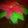 Gyemendiné Erika virágai