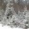 Első hó Marosfőn