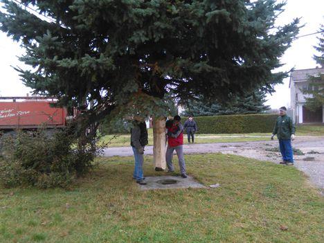 Karácsonyfa állitás 009