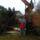Karácsonyfa állitás  20014.12.04