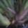 Cymbidium-014_1897891_1635_t