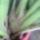 Cymbidium-015_1897893_8526_t