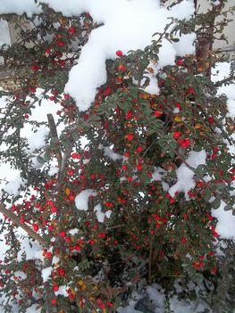 Dec. 27- az első hó