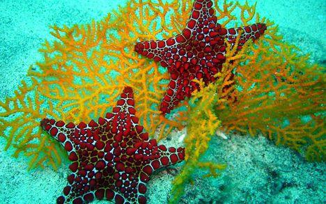 tengeri csillagok 1