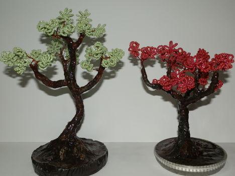 Bonsai 11