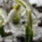 Könyörgés tavasszal - Kányádi Sándor
