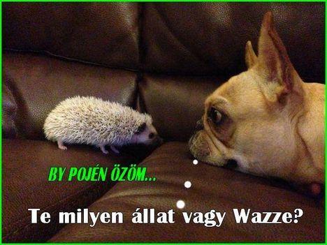 Kutya és süni