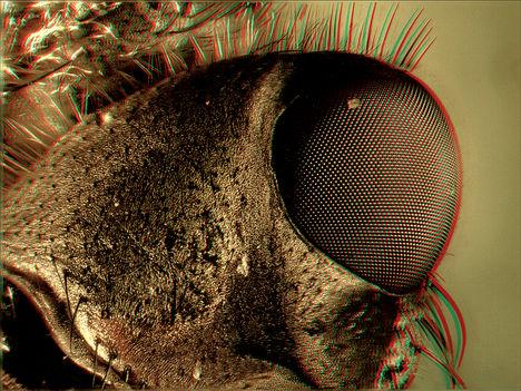 Légyfejrészlet (2) 3D