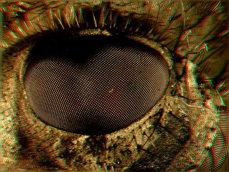 Légyfejrészlet 3D