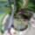 Orchidea-005_1890645_9630_t