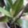 Orchidea-007_1890640_4716_t