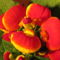 papucs virág