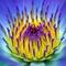1198_kvety