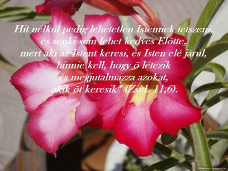Biblia szöveg ...