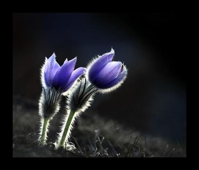 Kis virág 5