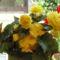 Virágaim 2013. 6