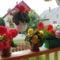 Virágaim 2013. 8