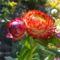 Virágaim 2013. 9