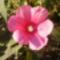 virágaim_32