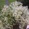virágaim_33