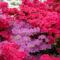 Virágok Indiából2