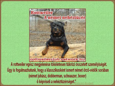 Rottweiler - A német nehéztüzér
