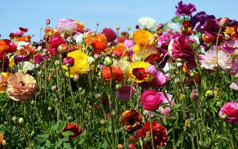 Szines virágok.