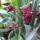 Ujj József orchideái 2015