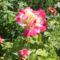 Virágok 18
