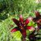 Virágok 34