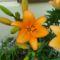 Virágok 35