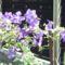 Virágok 38