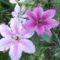 Virágok 6