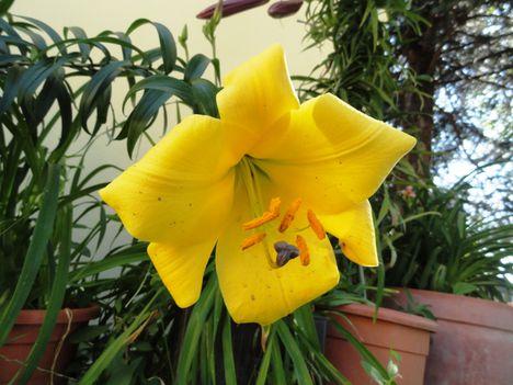 Virágok 91