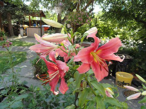 Virágok 93