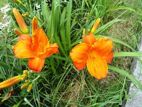 Virágok 95